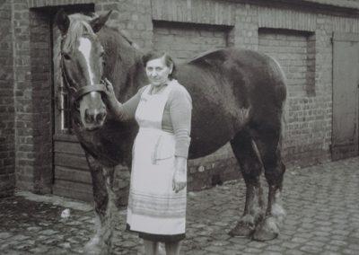 Pflege der Becker+Bernhard-Pferde